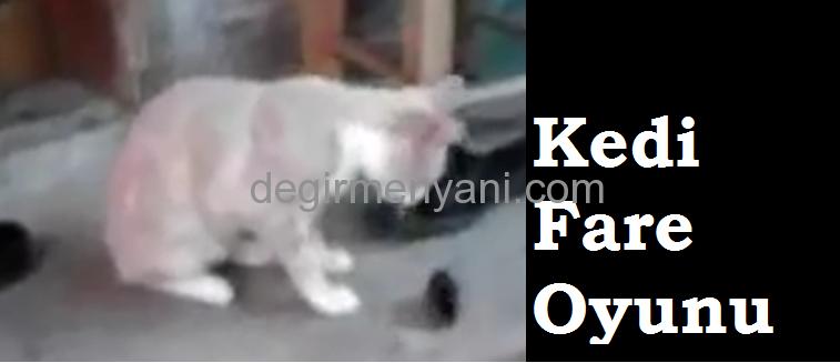 Kedi Fare İle Nasıl Oynuyor İzleyin