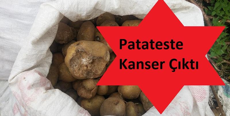 Patateste Kanser Hastalığı Çıktı