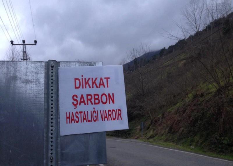 Adacık'ta Şarbon Karantinası Kaldırıldı