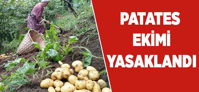Akçaabat'da Patates Üretimi Yasaklandı