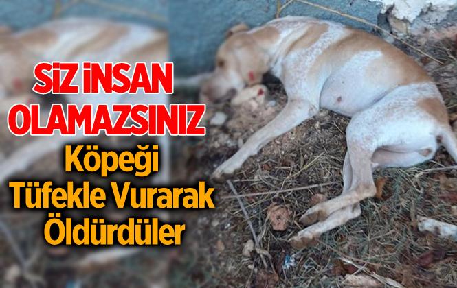 Adacık'da Köpeği Tüfekle Vurarak Öldürdüler